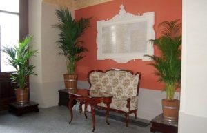 kentia palmy sukiennice