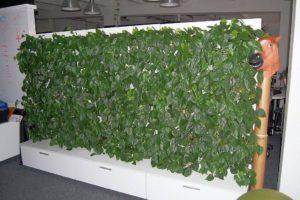 wnętrza ściana zielona