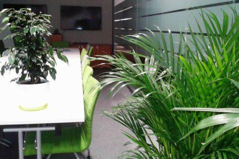 zieleń do biur