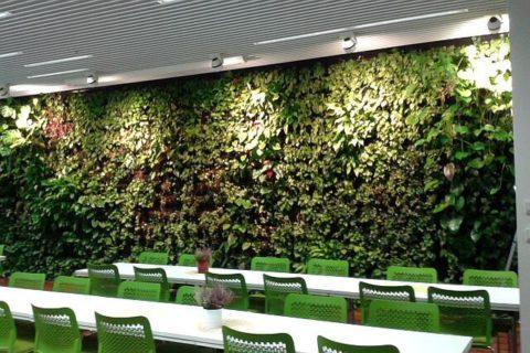 sciany zielone