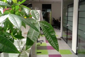 rośliny biurowe