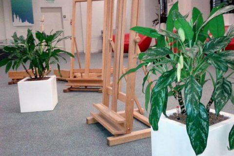 kraków, rośliny na warsztaty