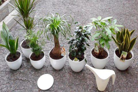 klasyczne, odporne rośliny do wnętrz