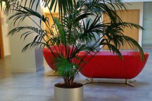 zieleń do wnętrz, palmy do holu, do biur