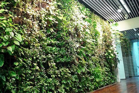 ściana zielona kraków
