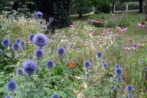 ogrody naturalistyczne bylinowe kraków