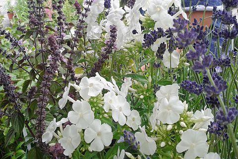 ogrody bylinowe kraków