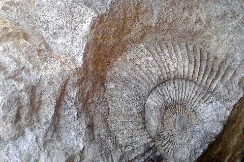 kamień skamielina