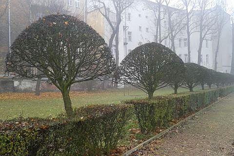 ogród zabytkowy kraków rabata żywopłoty formowane