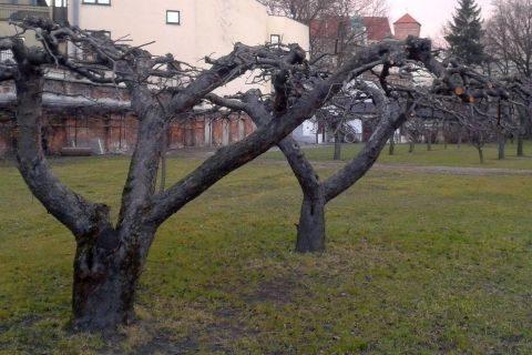 sady, drzewa owocowe kraków, cięcie, pielęgnacja drzew owocowych