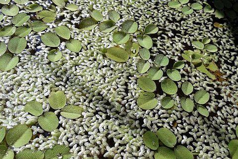ogród woda sadzawka