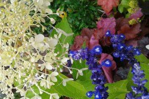 hortensja żurawka kompozycja kolorystyczna